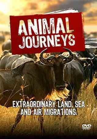 Animal Journeys (DVD)