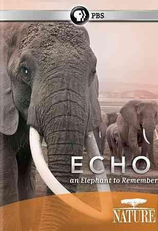 Nature: Echo: An Elephant to Remember (DVD)