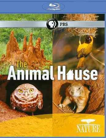 Nature: The Animal House (Blu-ray Disc)
