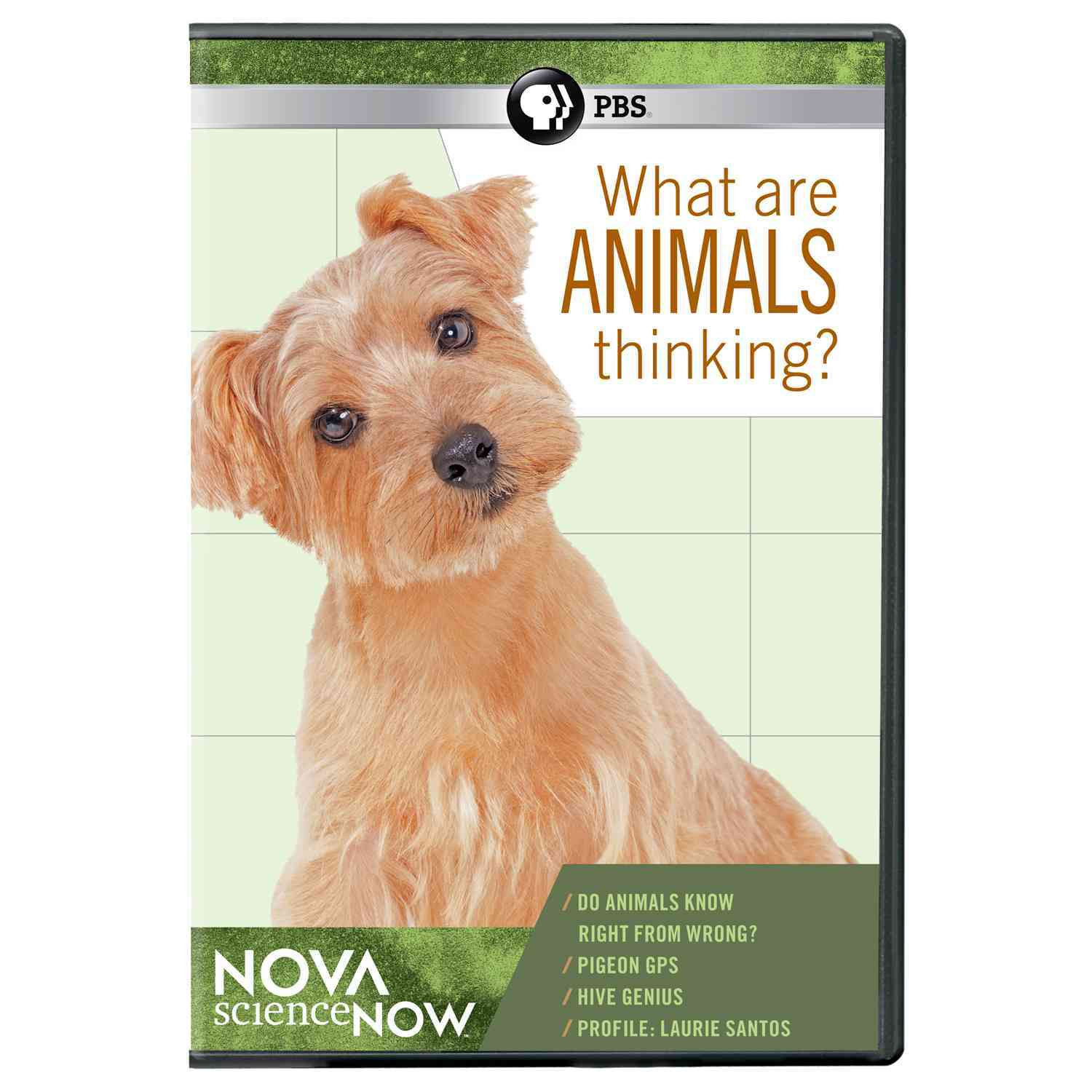 Nova ScienceNOW: What Are Animals Thinking? (DVD)
