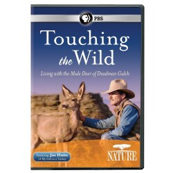 Nature: Touching the Wild: Living with the Mule Deer of Deadman Gulch (DVD)