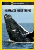 Humpbacks: Inside the Pod (DVD)