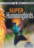 Nature: Super Hummingbirds (DVD)