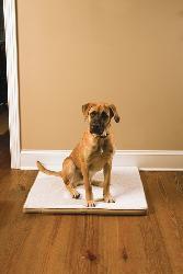 PetSafe Large Stay! Mat/ The Wireless Crate - Thumbnail 0