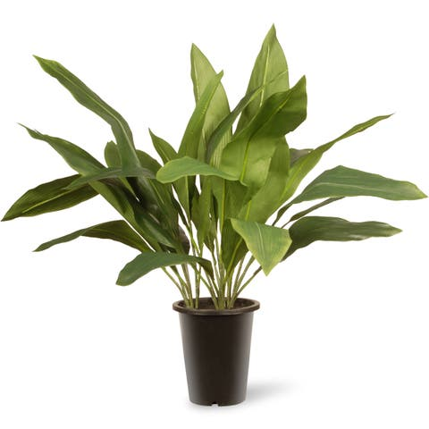 Green 30-inch Aspidistra Plant in Black Pot