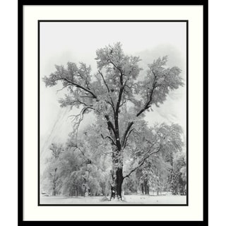 Ansel Adams 'Oak Tree, Snowstorm, Yosemite National Park-1948' Framed Art Print 27 x 32-inch