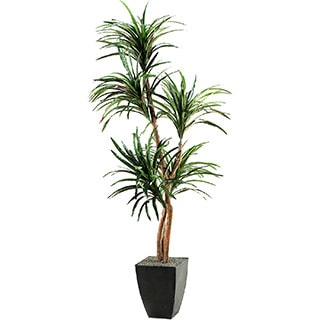 D&W Silks Dracaena Tree in Square Metal Planter