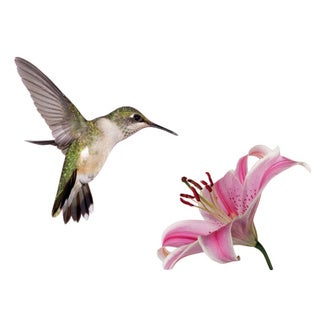 Hummingbird Vinyl wall decal