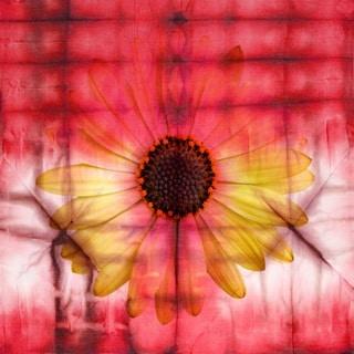 Parvez Taj 'Glowing Sunflower' Canvas Art