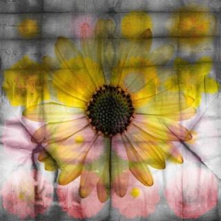 Parvez Taj 'Pink and Yellow Sunflower' Canvas Art