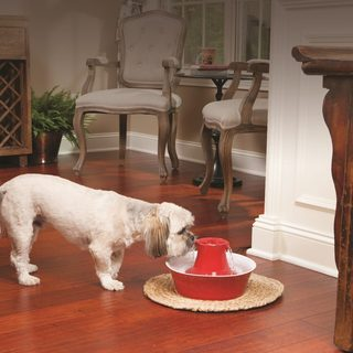 PetSafe Drinkwell Stoneware Avalon Red Dog and Cat Fountain