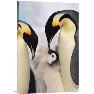 Global Gallery Konrad Wothe 'Emperor Penguin parents with chick, Antarctica' Stretched Canvas Artwor