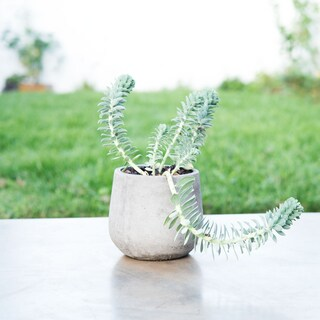 Eco-concrete Bua Planter , Handmade in Vietnam (4 options available)