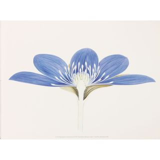 Museum of London Flower Dissection V
