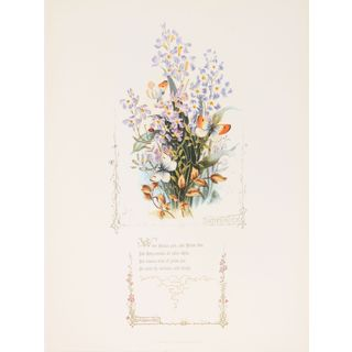 Shakespeareâs Flowers, Ladysmock