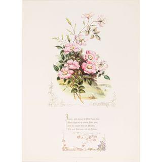 Shakespeareâs Flowers, Eglantine