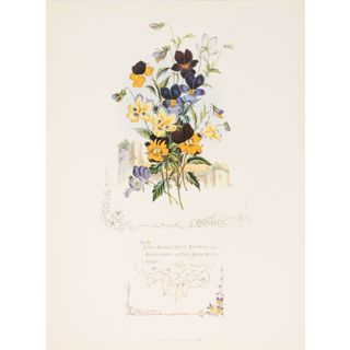 Shakespeareâs Flowers, Pansies
