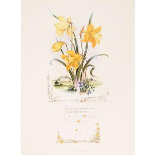Shakespeareâs Flowers, Daffodils