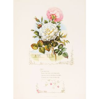 Roses by Paul Jerrard from Shakespeare's Flowers