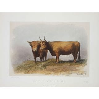 Vache De West, David Low