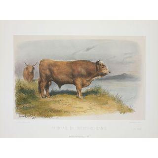 Taureau De West-Highland, David Low