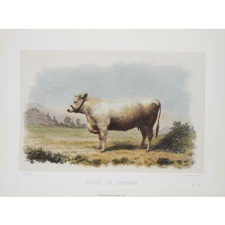 Vache De Durham, David Low