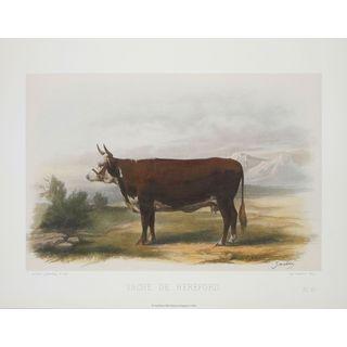 Vache De Hereford, David Low