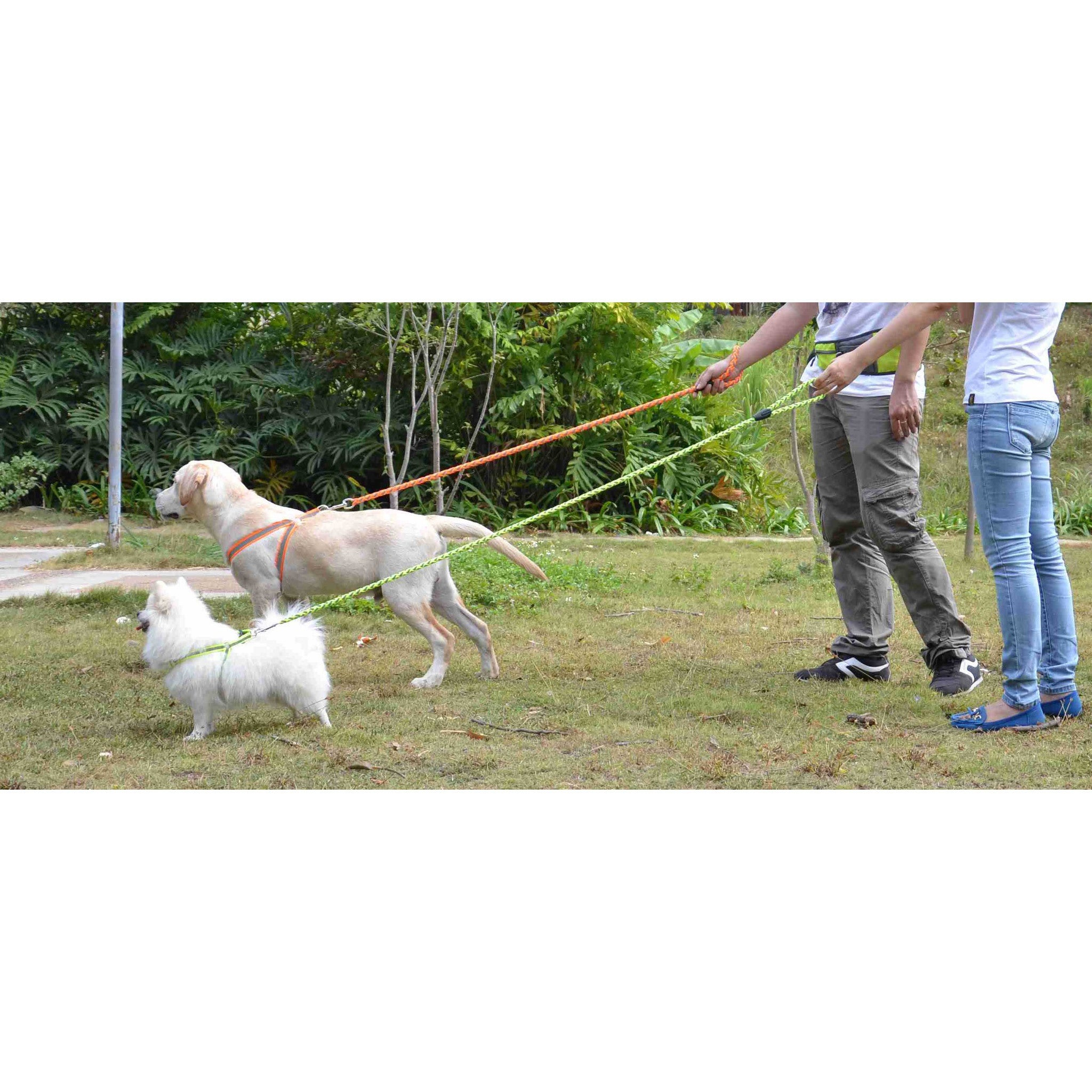 Petlife Dog Leash and Harness Reflective Stitched Easy Te...