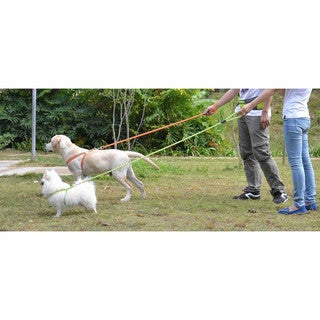 Dog Leash and Harness Reflective Stitched Easy Tension Adjustable 2-in-1