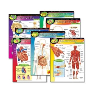 Trend The Human Body Learning Chart (Pack of 6)