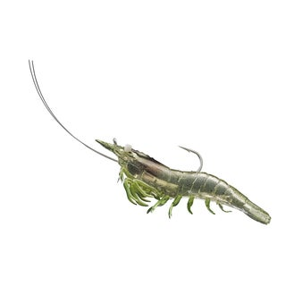 LiveTarget Rigged Shrimp Soft Plastic Grass Shrimp 1/ 0