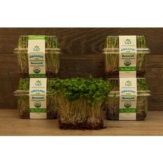 Urban Produce Certified Organic Living Broccoli Microgreens (Pack of 4)