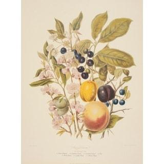 The Almond Tribe, Elizabeth Twining Print