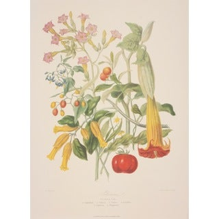 The Potato Tribe, Elizabeth Twining Print