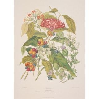 The Madder Tribe, Elizabeth Twining Print Art