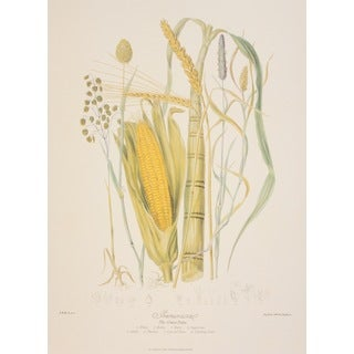 The Grass Tribe, Elizabeth Twining Print Art