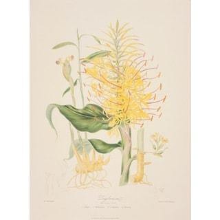 The Ginger Tribe, Elizabeth Twining Print Art