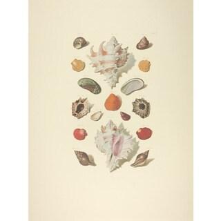 Fuentabella Shell Collection I Print Art