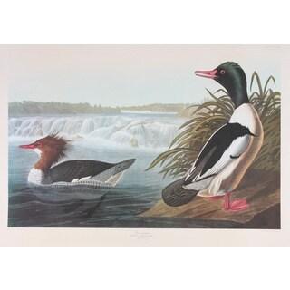 Goosander, Audubon Print Art