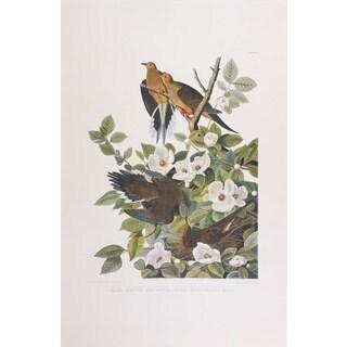 Turtle Dove, Audubon Print Art