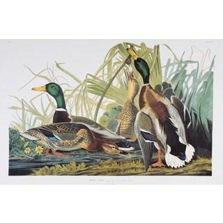 Mallard Duck, Audubon Print Art