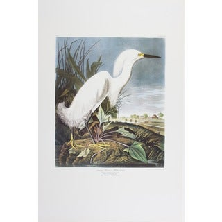 Snowy Heron, Audubon Print Art