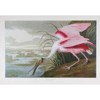 Roseate Spoonbill, Audubon Print Art