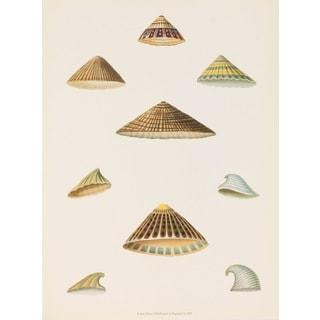 """E. Donovan's """"Seashells"""" Print Wall Art"""