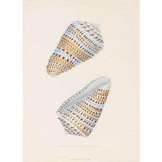 Seashell V, E. Donovan Print Art