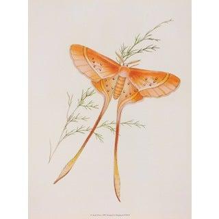 19th-C. Butterflies VI, E. Donovan Print Art