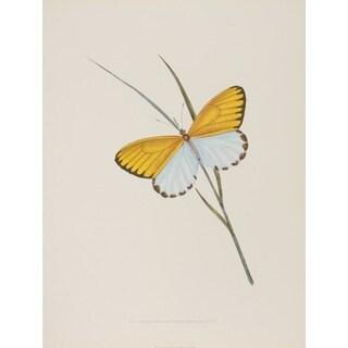 19th-C. Butterfly VI, E. Donovan Print Art