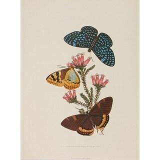 19th-C. Butterfly V, E. Donovan Print Art