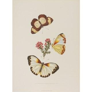 19th-C. Butterfly I, E. Donovan Print Art