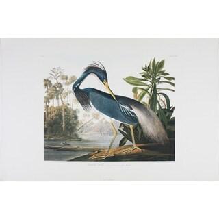 Louisiana Heron, Audubon Print Art